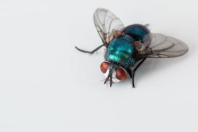 Insekten mit Haarspray vertreiben