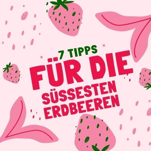 Mit diesen Tipps erhältst du die besten Erdbeeren