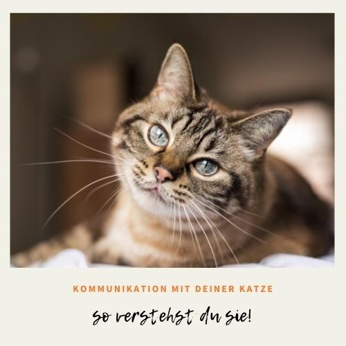 Verstehe deine Katze