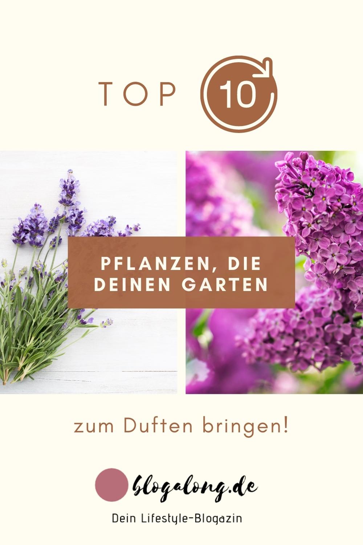Diese Pflanzen bringen deinen Garten zum Duften