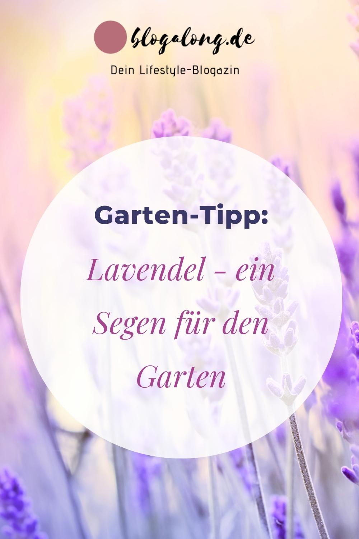 Warum ist Lavendel ein Segen für deinen Garten