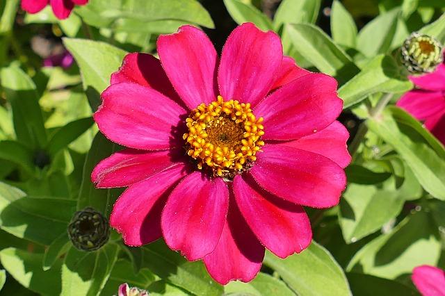 Hitzebeständige Pflanzen im Garten