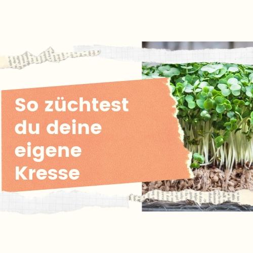 Kresse Zuhause züchten - so einfach geht's